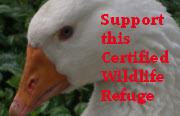 Click here to support the Falcon Cove Farm!